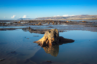 submerged forest, Borth